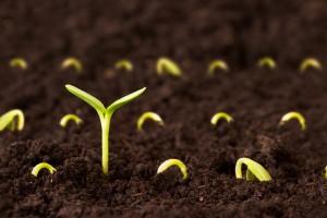 Что делает перекись водорода с рассадой